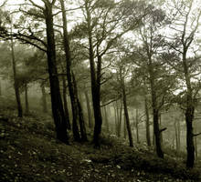 forest by orcunceyhan