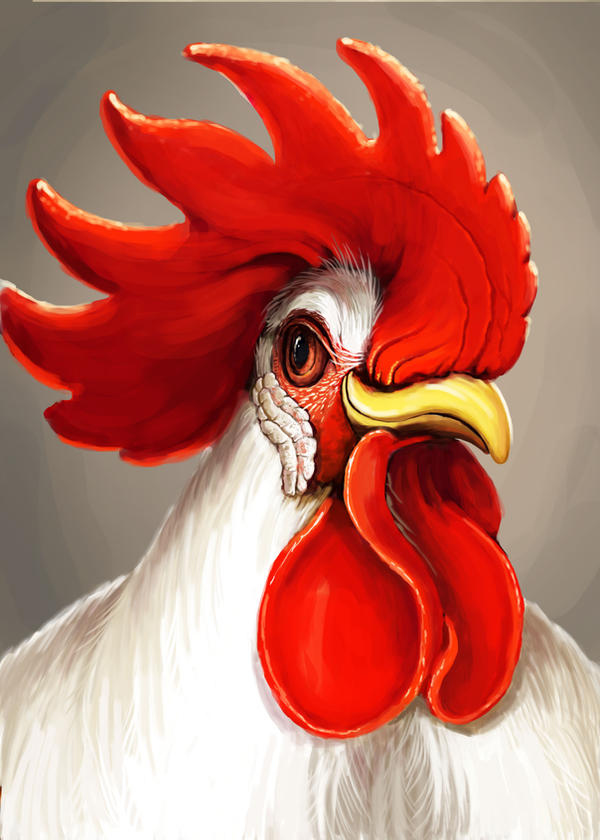 A rooster by HuynhThiNhuY