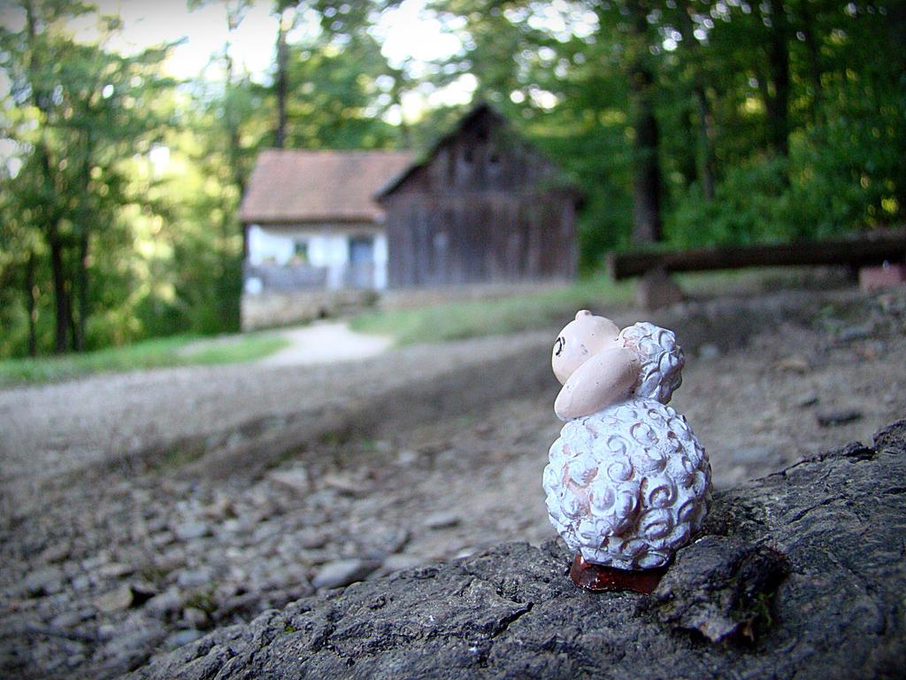 Home Sheep Home by alexa-andra
