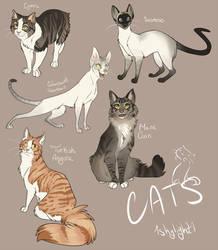 Catsss by 1skylight1