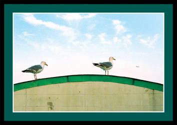 Two Birds and an Airplane by RoccosDesigns