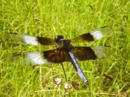 Dragonfly by WurdBendur
