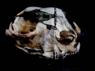 Moldy Skull by slimfadey