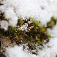 Get Warm by Ohiko4Hatsuyume