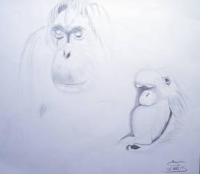 Orangutan and Baby by davemcg65