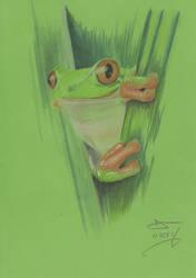 Frog by davemcg65