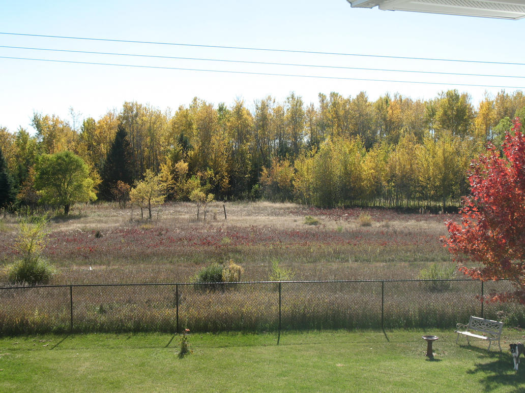 Autumn 2014 in Minnesota - 13 by CatComixzStudios