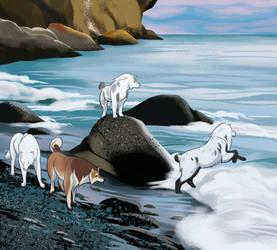 watch the rocks