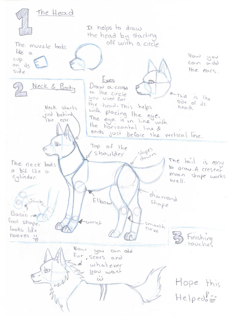 Step Drawing · Wolf Drawing Guide By Silverwolfspirit13 On Deviantart