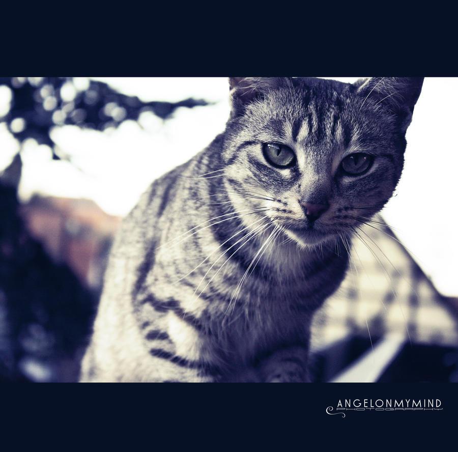 Tinka kitty by AngelxBaby