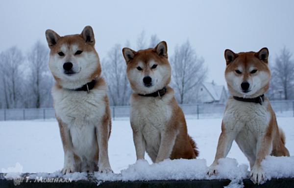 Winter wonderland by Gyokumi