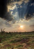 Splendor by BLPH