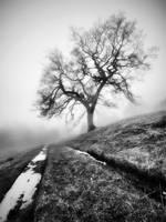 Cheshire Winter