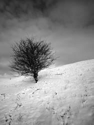 Winter Slope