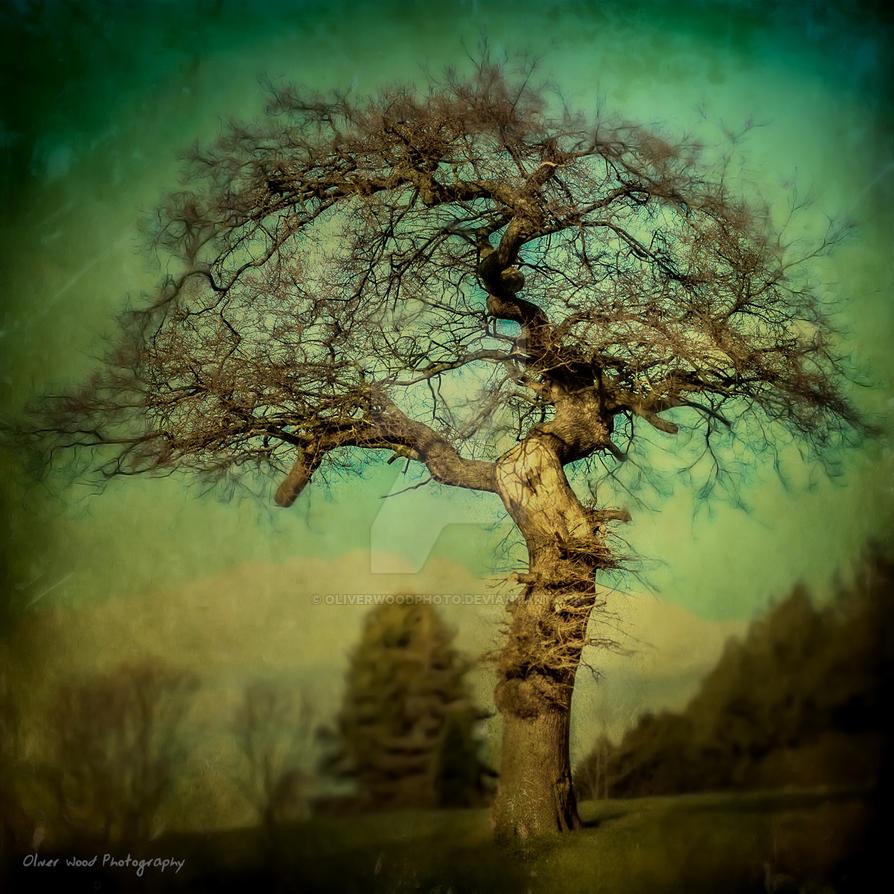 Twisted Oak by OliverWoodPhoto