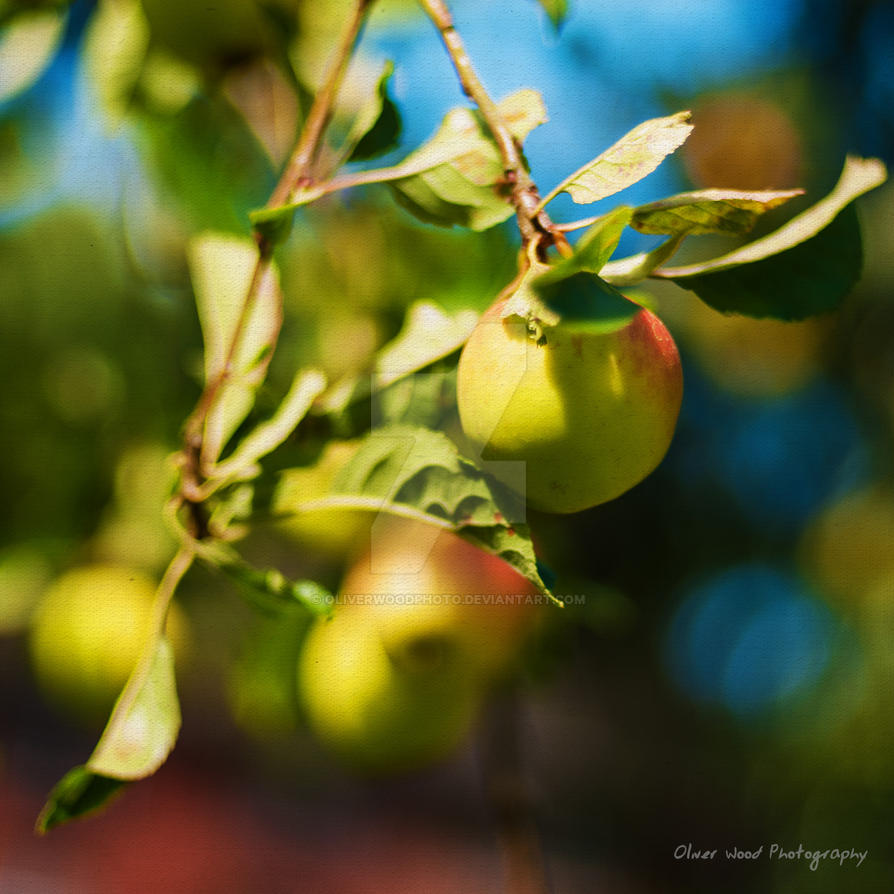 Apples by OliverWoodPhoto