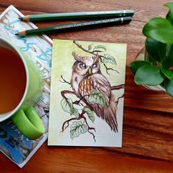 ~Owl love