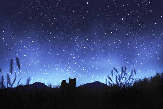 Gazing the Stars