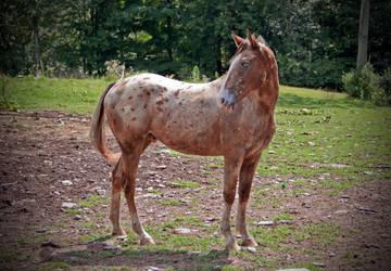Meet My First Horse, Jack