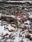 Winter Wreath by Sitara-LeotaStock