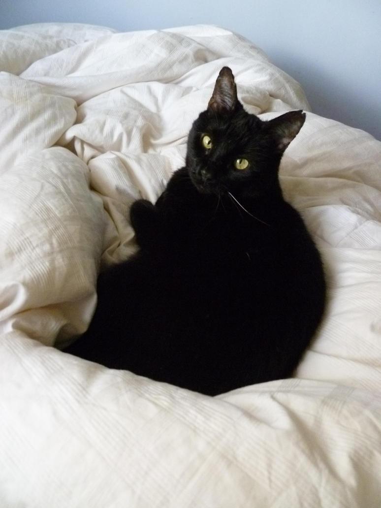 Rest in peace, sweet kitty by Sitara-LeotaStock