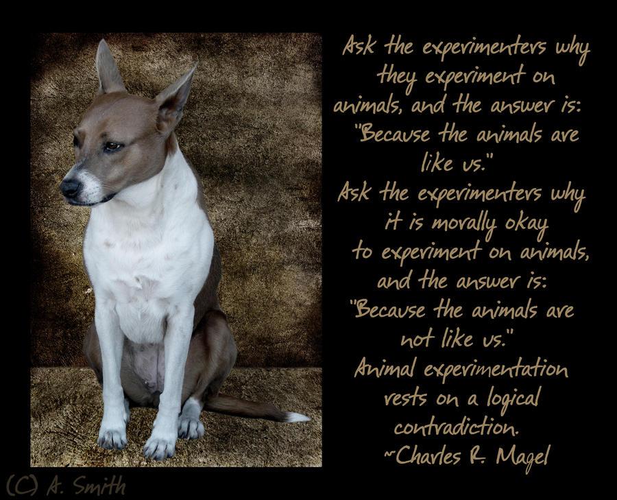 animal testing quotes quotesgram