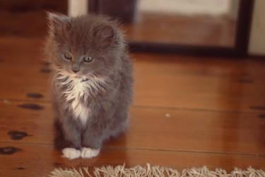 Jadzia the Kitten