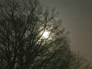 Winter Moon through Tree