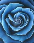 Rose VIII