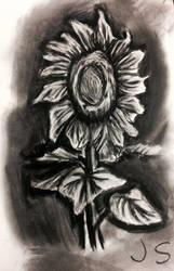 Charcoal flower by awdrgy818
