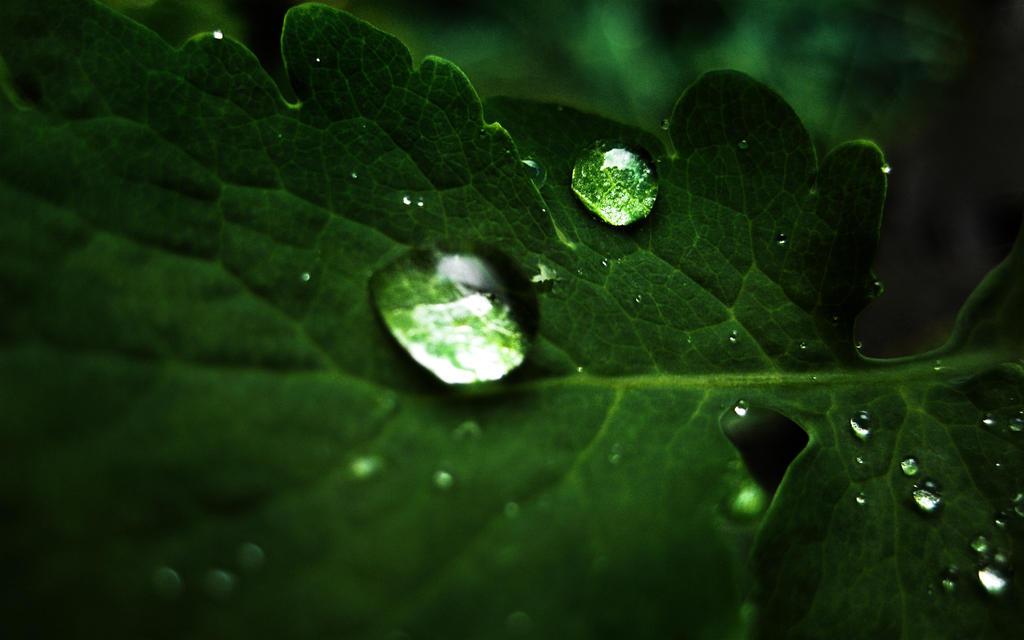 macro droplets wallpaper by denkyo