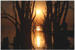 Drowned Trees Sunset