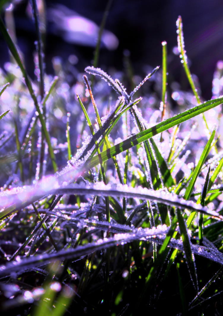 frosty grass by Lady-of-Lakes-End