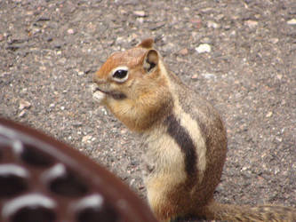 Chipmunk by StrawberryGoth