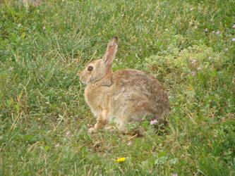 Bunny by StrawberryGoth