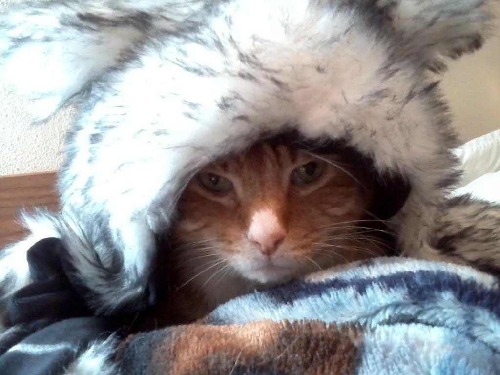 Hat Cave Cat by KittySib