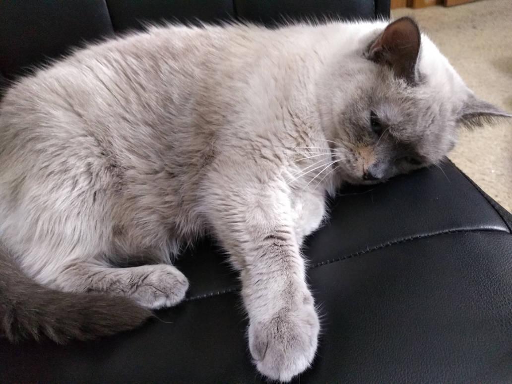 My Pretty Kitty by KittySib