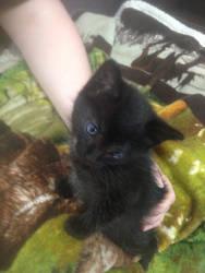 Garrus Kitten, Still Tiny
