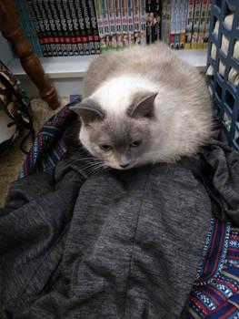 Cat Nest Cutie
