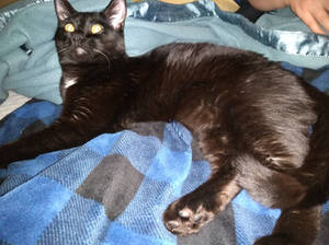 Garrus Kitty, Black On Blue