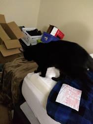 Garrus Kitty, On the Move