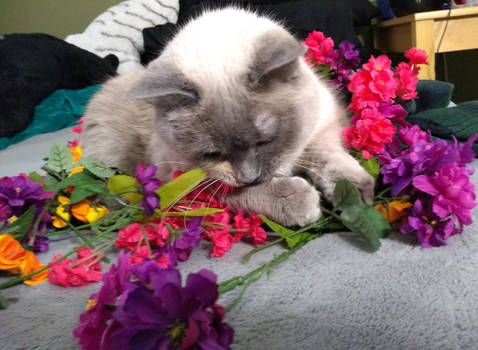 Valentine Bouquet, Extra Cute