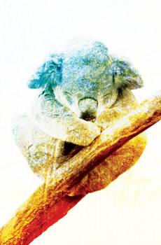 Koala At Peace