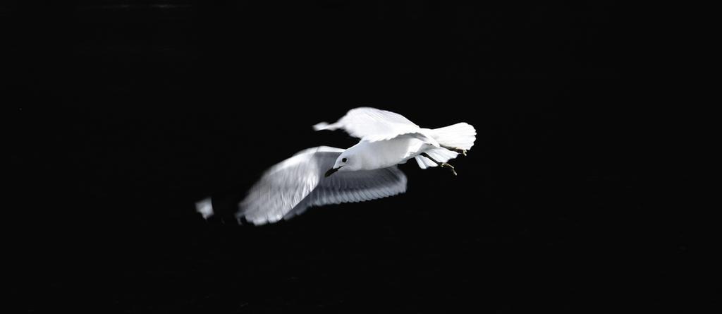Seagull II edited by Salvarum