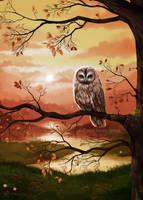 Owl by Xenonia