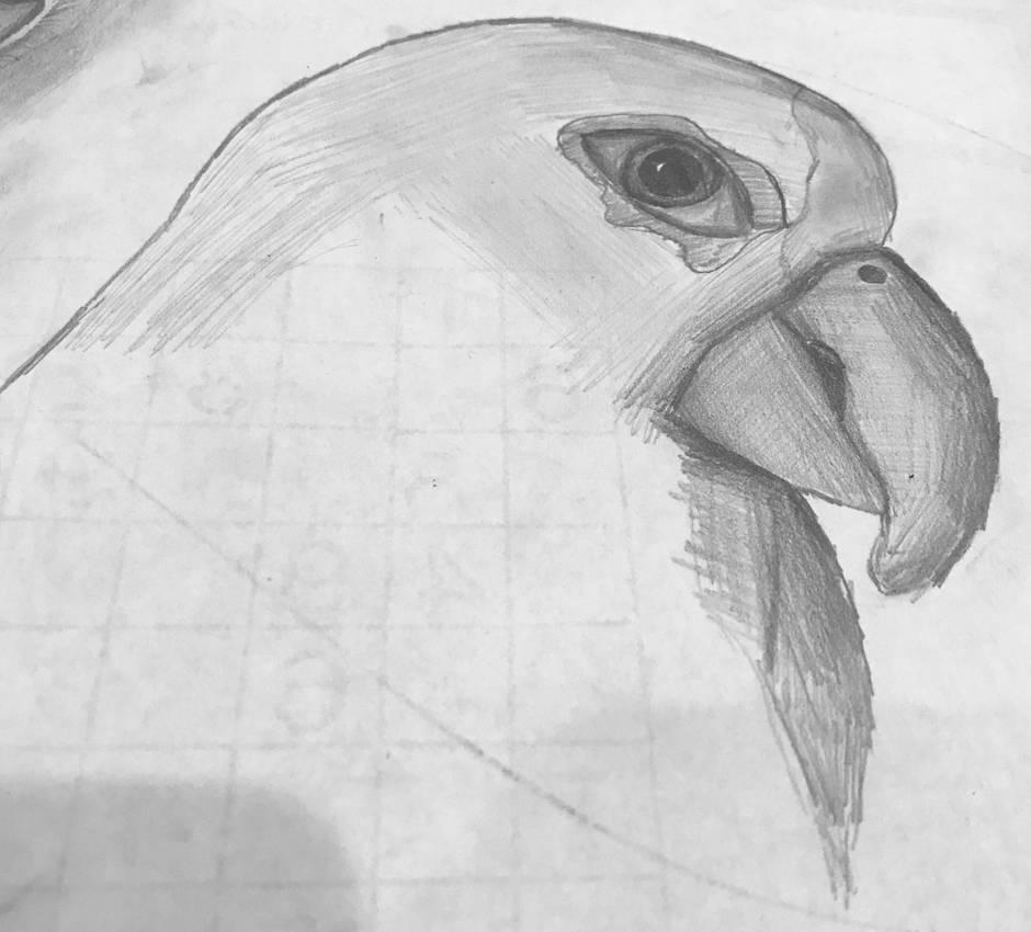 Parrot by voodooattack
