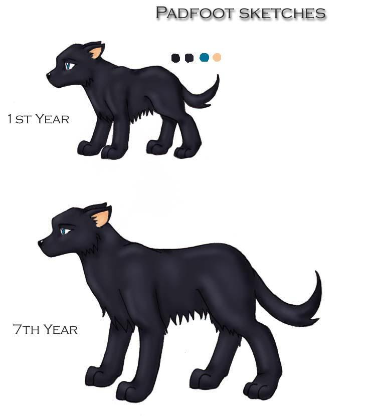 Harry Potter Big Black Dog