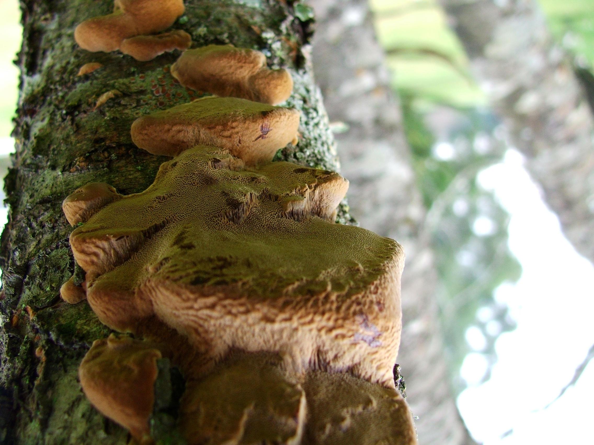 Pubg By Sodano On Deviantart: Infected Mushroom By Virgensuicida On DeviantArt