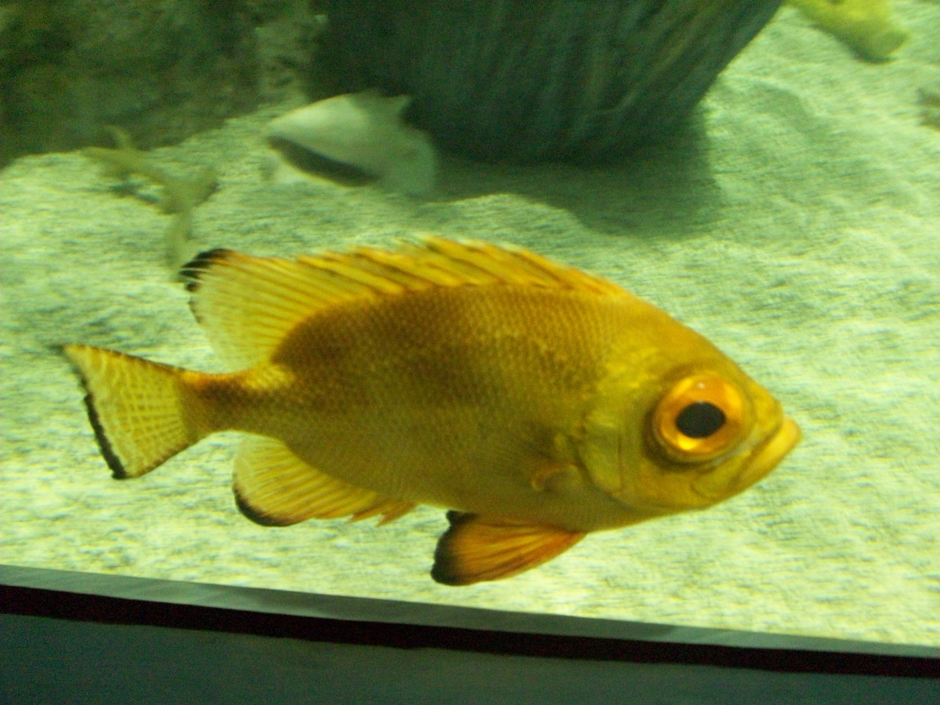 Moving Pictures Of Fish Slow moving fish by