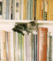 Kitten. by Hoski